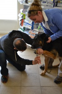Reeses was a good boy while Dan Leahy of Doggy Do's in Avon clipped his nails.