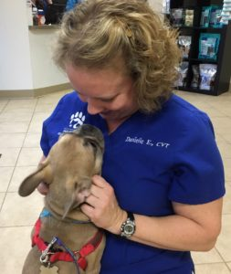 Danielle Earle, CVT welcomes Beckham, a French Bulldog from West Hartford