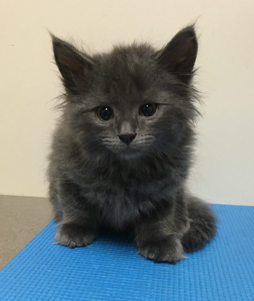 A precious little kitten in for its first visit at PAW.